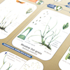 A3 Guide to Common Grasses  small