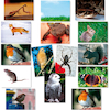 Animal Food Chains Photopacks A4 14pk  small