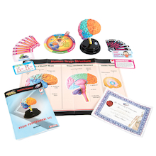 Human Brain And Resources Science Set  medium