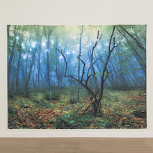 TTS Immersive Environment Backdrop Enchanted Forest  medium
