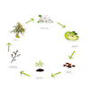 Plant Life Cycle Magnetic Pieces  small