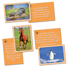 Discovering Animals Activity Cards  medium