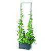 Pea and Bean Planter  small