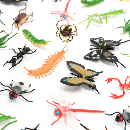 Minibeasts Pack  large