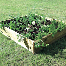 Large Square Wooden Grow Bed  medium