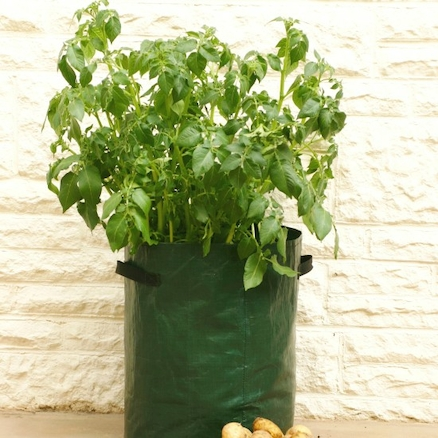 Patio Potato Planter 3pk  large