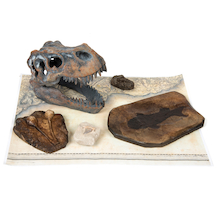 Dinosaur Fossil Kit  medium