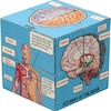 Human Body and Anatomy Picture Cubes 6pk  small
