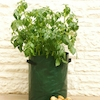 Patio Potato Planter 3pk  small