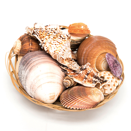 Basket of Sea Shells  large