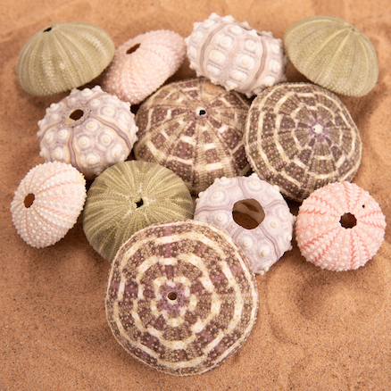 Urchins Set 12pk  large