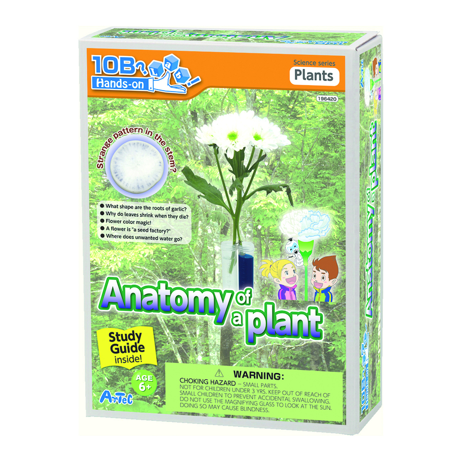 Buy Anatomy Of A Plant Experiment Kit | TTS