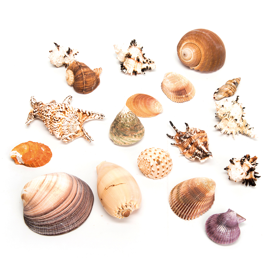 Buy basket of sea shells tts for Cost to build shell of house