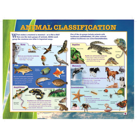 Animal Classification Playground Signboard  large