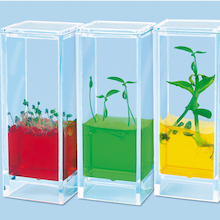 See Plants Grow Laboratory  medium