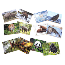 Endangered Animals Photographic Jigsaws  medium