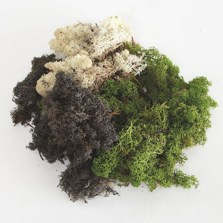 Mixed Moss Pack  large