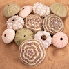 Urchins Set 12pk  small