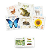 Life Cycles Book Pack  small