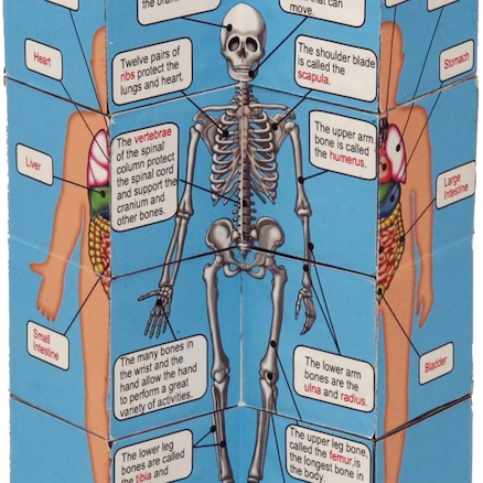 Human Body and Anatomy Picture Cubes