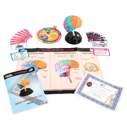 Human Brain Model And Resources Kit  large