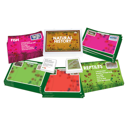 Classification: Natural History Activity Cards  large
