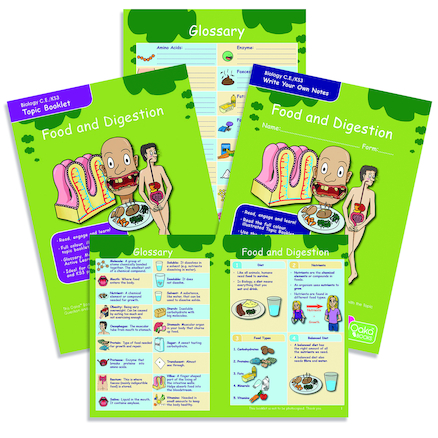 KS3 Food and Digestion Revision Activity Cards  large