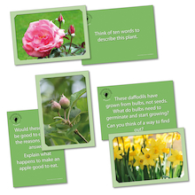 Discovering Plants Activity Cards  medium