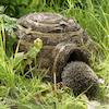 Hedgehog House  small
