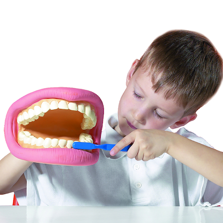 Healthy Set of Teeth Model 19cm  large