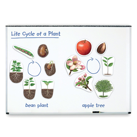Giant Magnetic Plant Life Cycle Pieces  large